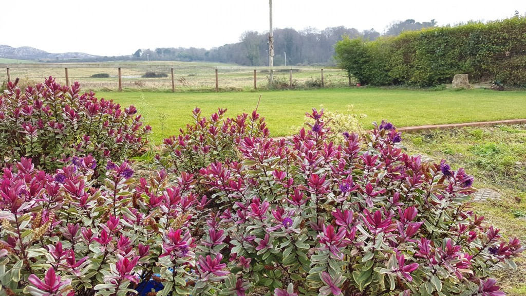 living and learning English at your teachers home Bucksmore Homelingua